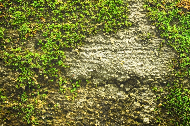Wallpaper close-up outdoors rough texture