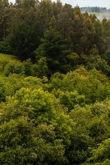 霧に満ちた山の木々の壁紙