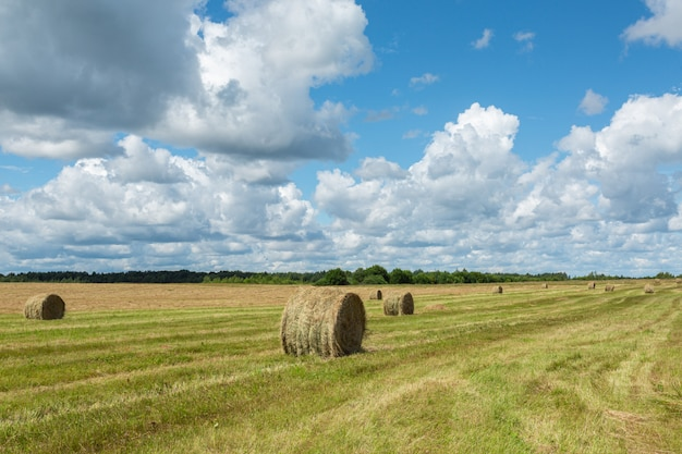 Wallpaper with summer countryside  nature of north-west russia.