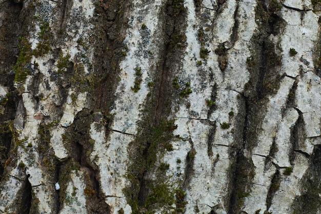 Кора грецкого ореха крупным планом и рельефная текстура