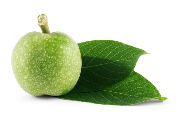 Грецкие орехи плоды зеленая ветка дерева, изолированные на белом фоне