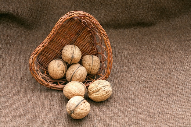 Walnuts in the old wicker basket on burlap