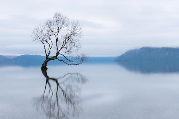 The wanaka tree, the most famous willow tree in lake wanaka new zealand