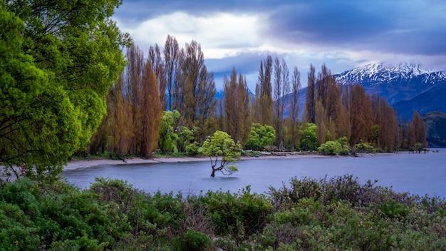 Wanaka tree with lake mountain view