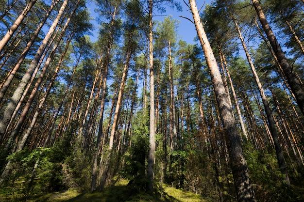 Теплая и солнечная погода в осенний сезон в смешанном лесу, в котором растут разные виды и виды деревьев.