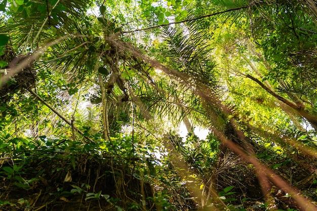 열대 섬의 따뜻한 여름날, 푸른 야자수 위의 푸른 하늘 스톡 사진