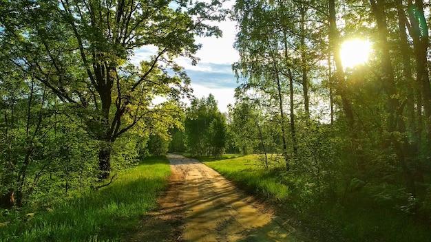 夏の森の暖かい夕日