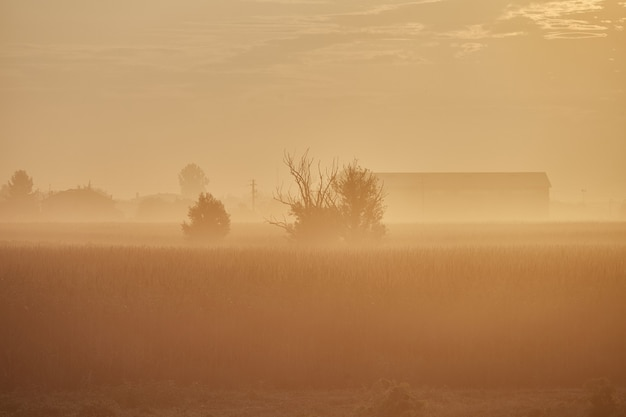Warm yellow color mist in the field