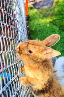 동물원에 있는 귀여운 애완동물 워렌 브라운.