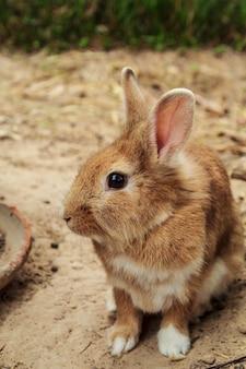 동물원에 있는 귀여운 애완동물 워렌 브라운. 프리미엄 사진