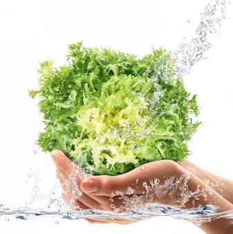 Washing fresh lettuce