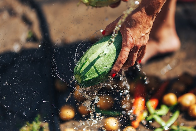 Washing vegetables, woman hands wash green zucchini outdoors sun light