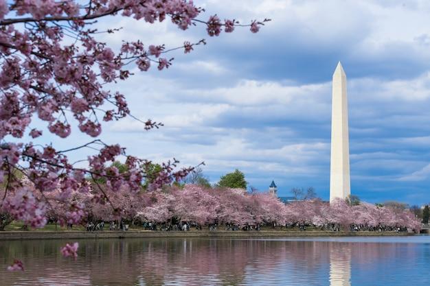 ワシントンdcの潮汐盆地での桜の祭り中のワシントン記念碑