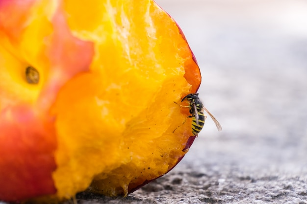 Wasp eating peach