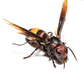 Wasp on the white scene