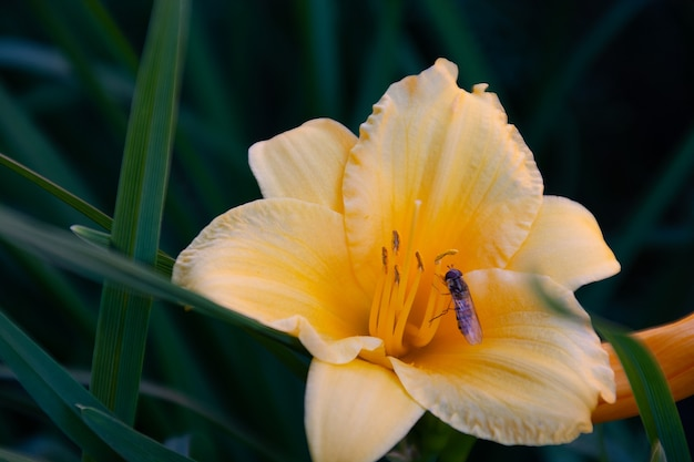 Wasp on a yellow flower in green grass