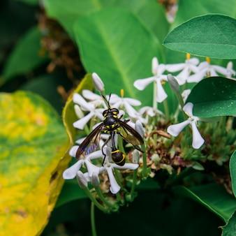 Wasp花から甘い蜜を探しています。