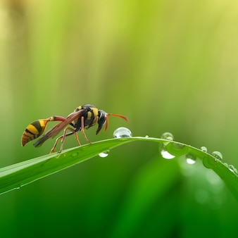 Wasps and morning dew