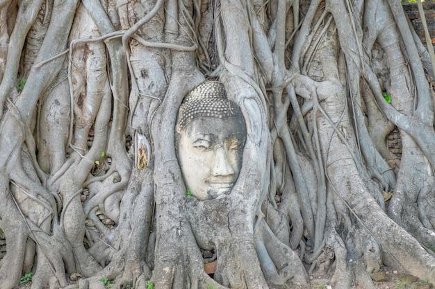 Голова будды в корнях дерева на wat mahathat истории ayutthaya таиланда.