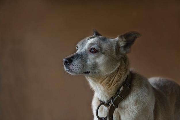 暗い背景でポーズをとる番犬