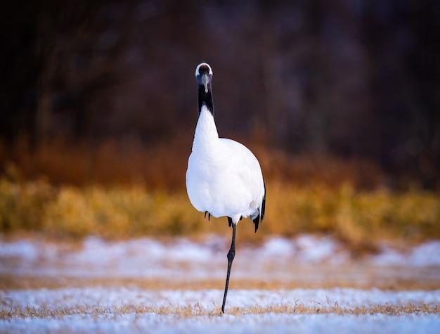 北海道釧路の日当たりの良い畑の水鳥