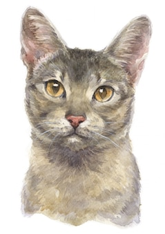 Water colour painting of abyssinian shorthair cat