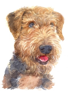 Water colour painting of airedale terrier dog
