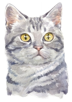 Water colour painting of american shorthair cat