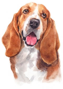 Water colour painting of basset hound