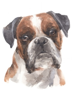 Water colour painting of boxer