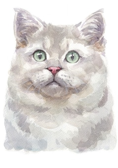 Water colour painting of british shorthair cat
