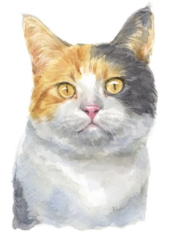Water colour painting of dilute calico cat