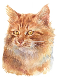 Water colour painting of ginger longhair cat