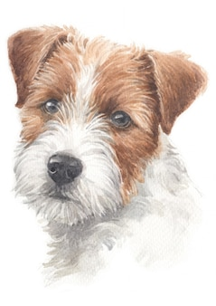 Water colour painting of jack russell terrier
