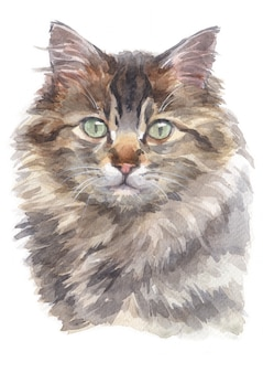 Water colour painting of maine coon cat