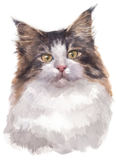 Water colour painting of norwegian forest cat