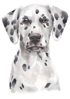 Акварельная живопись далматина Premium Фотографии