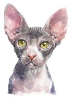 スフィンクス猫の水彩画