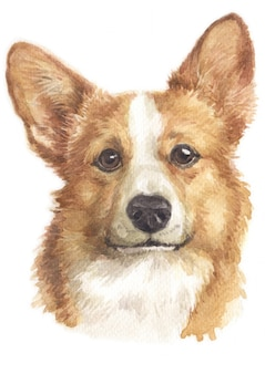 Water colour painting of pembroke welsh corgi