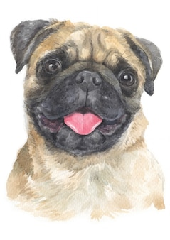 Water colour painting of pug