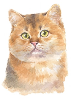 Water colour painting of scottish shorthair cat