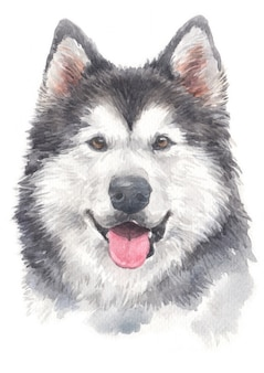 Water colour painting of siberian husky