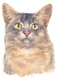 Water colour painting of somali shorthair cat