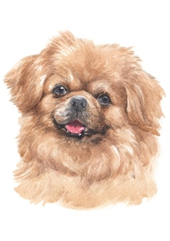 Water colour painting of tibetan spaniel