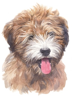 Water colour painting of tibetan terrier