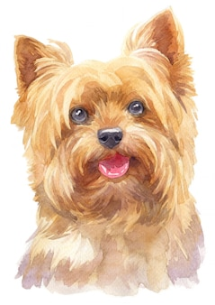 Water colour painting of yorkshire terrier