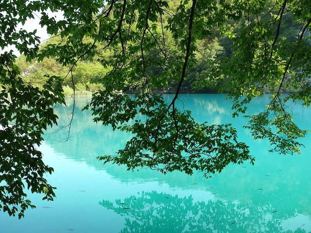 Water croatia lakes plitvice