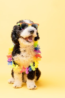 Водяная собака в солнцезащитных очках с радужным флагом и цепочкой цветов на желтом фоне лгтб