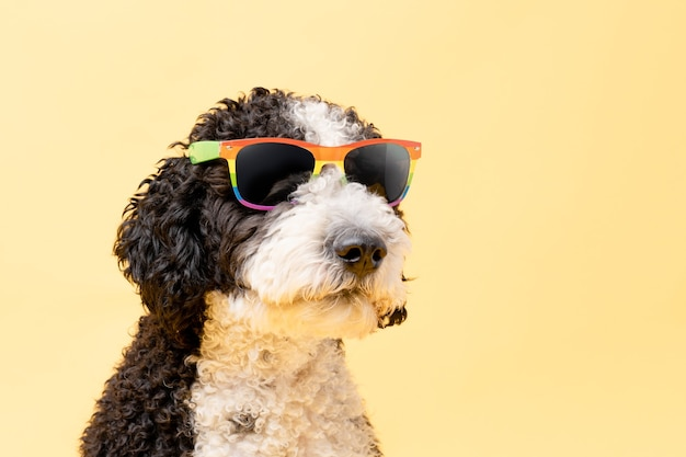 Водяная собака в солнцезащитных очках с радужным флагом на желтом фоне копией пространства лгтб