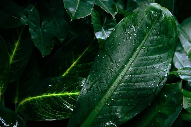 Капля воды после дождя на листе, красивом в джунглях тропического леса, естественные зеленые листья